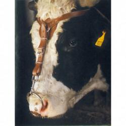 Cabezada marrón con mosquetón para toro
